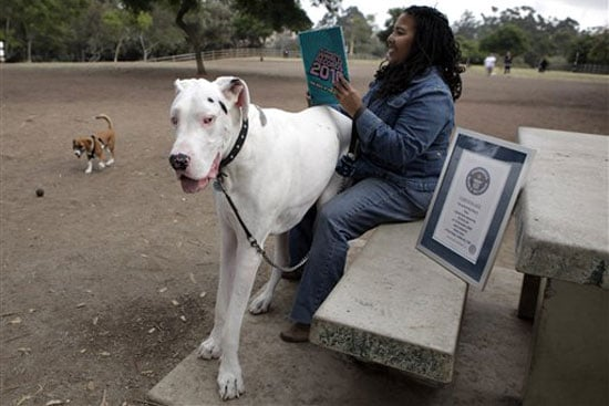 The Scoop: Titan Named the World's Tallest Living Dog