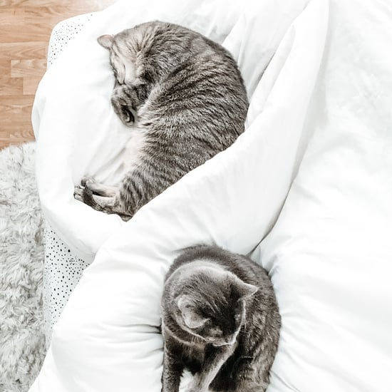 Why Does My Cat Sleep at the End of the Bed on My Feet?