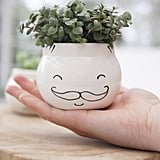 Moustache Face Planter
