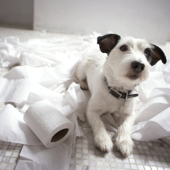 ASPCA Most Toxic Household Products For Pets