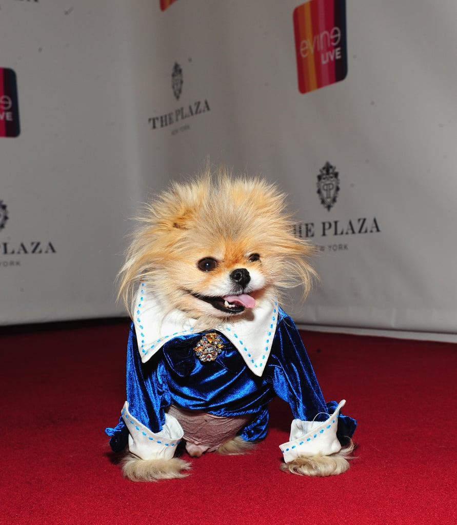 Dog Ate Some Rug: Lisa Vanderpump's Dog Giggy On Red Carpet
