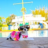 Thought Your Spring Break Was Lit? Check Out Tinkerbelle the Dog's Orlando Vacay