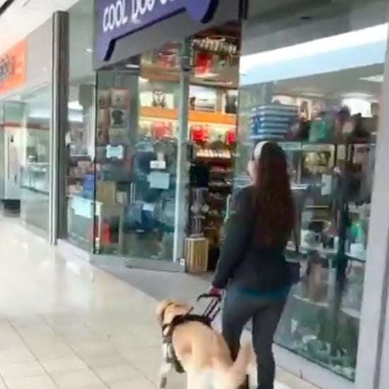 Guide Dog Walks Owner Into Cool Dog Gear Store