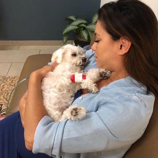 Eva Longoria Dog Jinxy Dies
