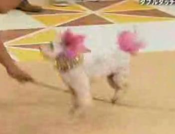 Jump Rope Doggies!