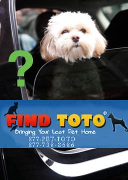 """How """"FindToto"""" Works . . . and Will It Work For Jess?"""