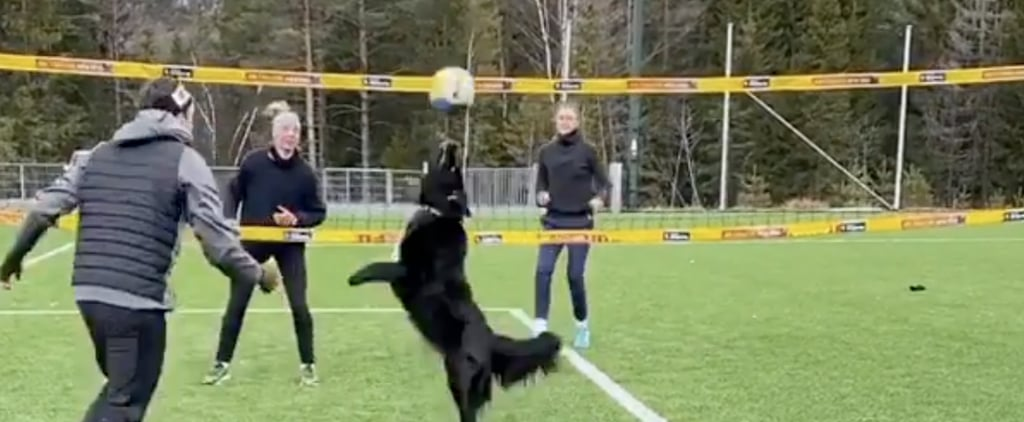 Watch This Video of a Dog Playing Volleyball With Humans