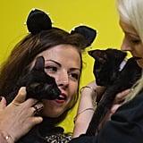 Cat Con LA 2016 Pictures