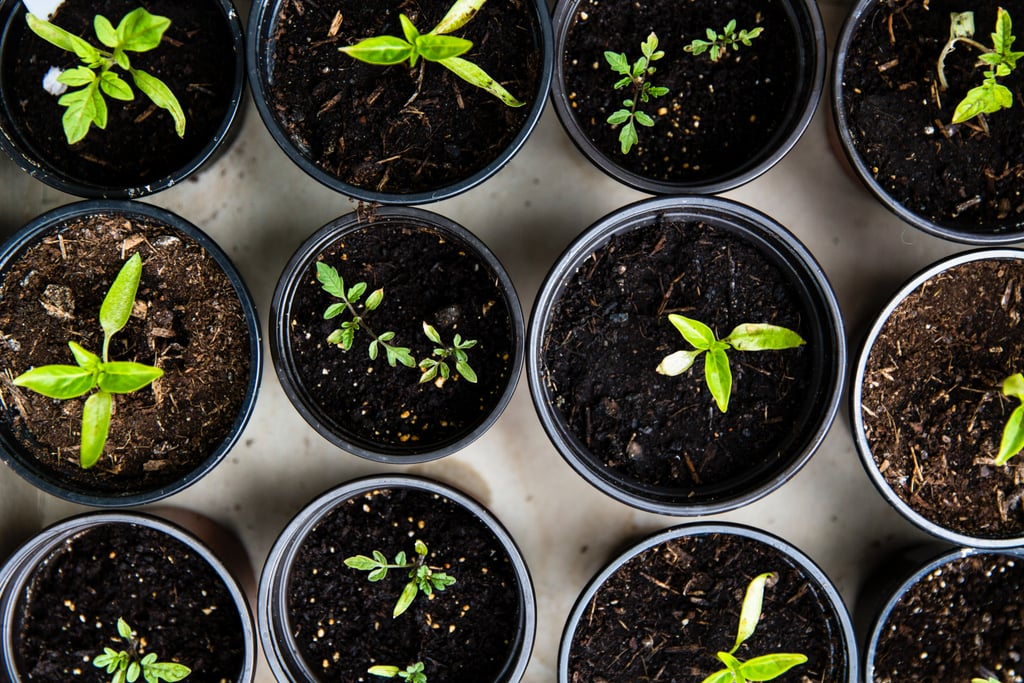 Your Number One Concern: Your Soil's Health