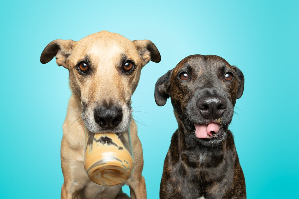 Photos of Rescue Puppies Eating Peanut Putter | Greg Murray