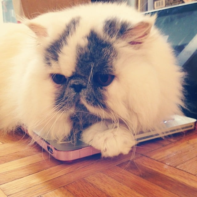 And get caught up with Smudge, the kitty that always looks adorable.  Source: Instagram user smudgethekitty