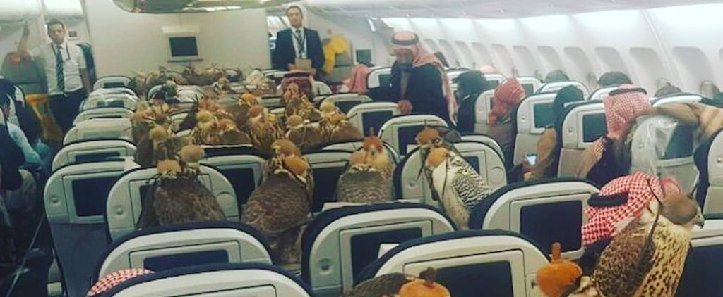 This Image of Falcons Traveling on a Plane Probably Isn't Fake