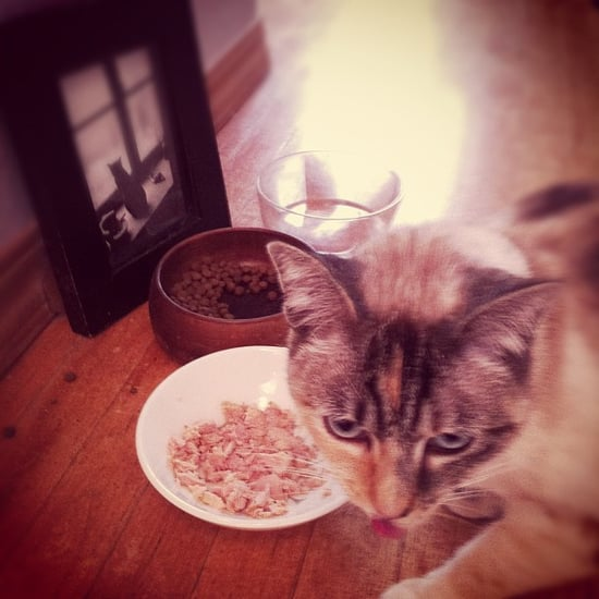 Is It OK to Feed Cats Table Scraps?