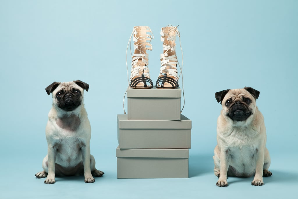 Pugs Gladys, left, and Peggy with Bionda Castana's Cream Leather Kiki Cage Heels ($940).