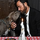 Tessa Thompson and Justin Theroux With Dogs at Screening