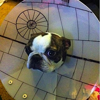 Cone of Shame Dog Costumes