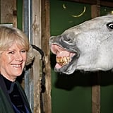 Camilla visited the London International Horse Show in December 2008.
