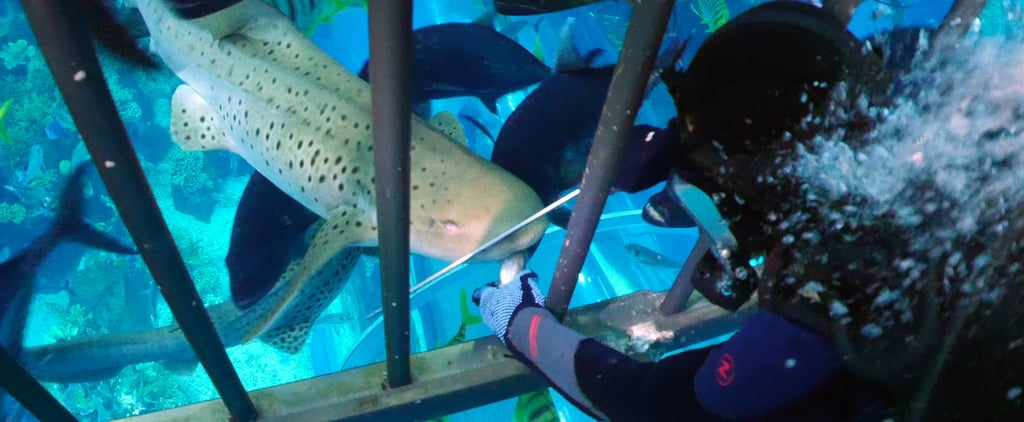 The Dubai Mall Brings Visitors to Shark Feeding Enclosure