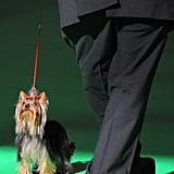 Witness a Wild Week at Crufts!