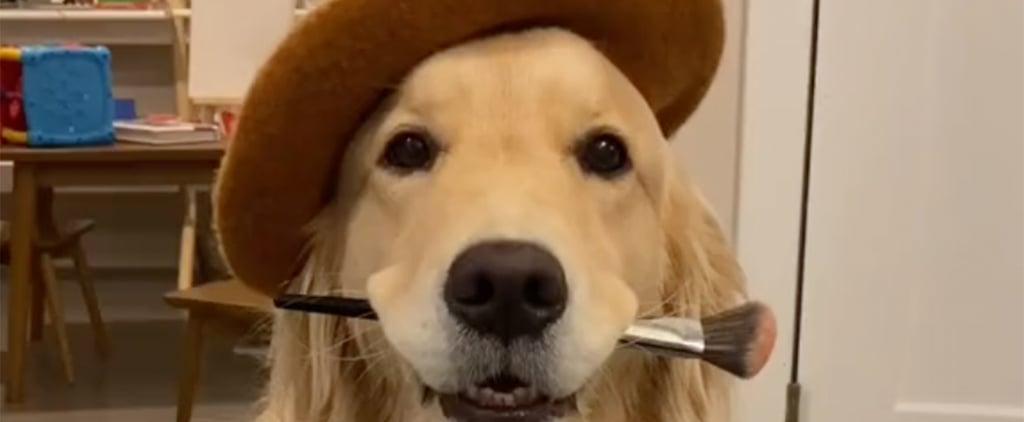 TikTok's Dog Painting Challenge | Funny Videos