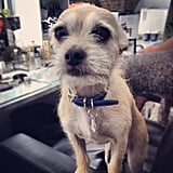 Chloe Moretz posted a sweet photo of her adorable dog, Jaxon. Source: Instagram user cmoretz
