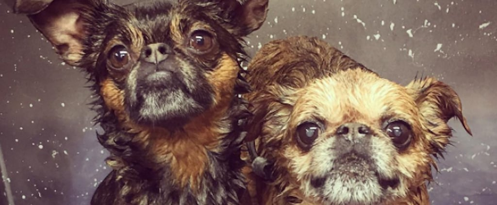 The 1 Thing Jess Rona Wishes People Knew Before Bringing Dogs to the Groomer