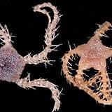 274 New Species Found off Tasmanian Coast
