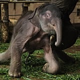 Pictures of Cute Baby Elephant at Berlin Zoo