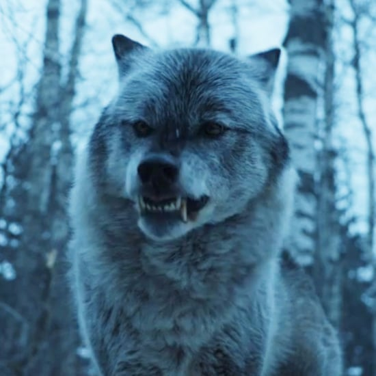 Is Nymeria Coming Back on Game of Thrones?