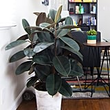 Decorate With Heat-Absorbing Houseplants