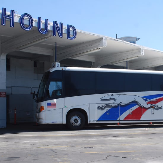 Greyhound Bus Driver Secrets