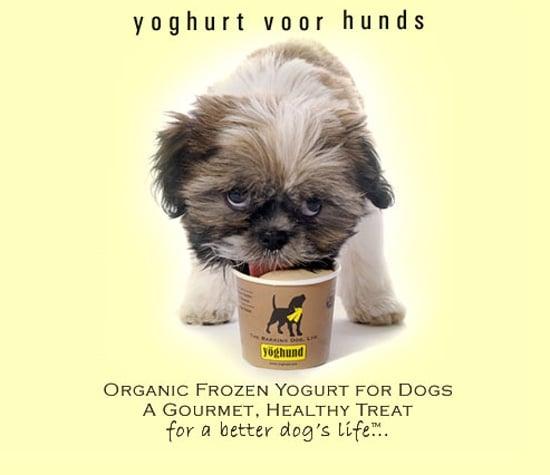 New Product Alert! Yöghund's Latest Flavor