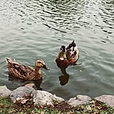 Feed some ducks together.