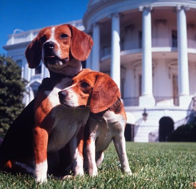 Pets Who Lived in the White House