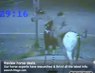 Videotape of Drunk Man Trying to Mount Fiberglass Horse