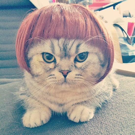 Cats Wearing Wigs