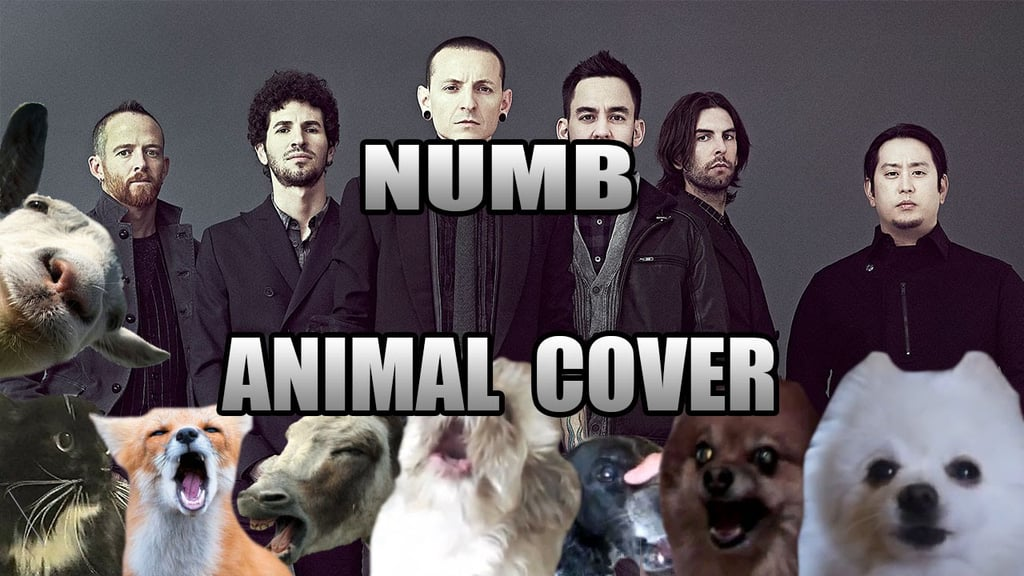 Weird Animal Noise Song Covers