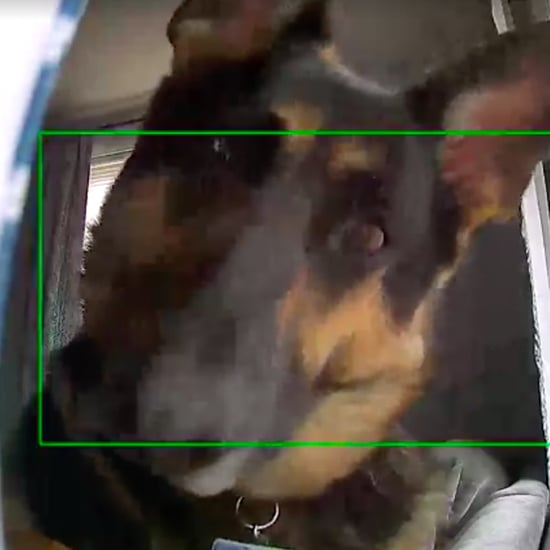 German Shepherd Dog on Security Camera