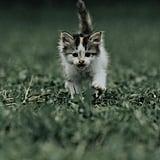 Run, fluffy baby, run!