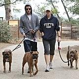 Jessica Biel and Justin Timberlake Walk Their Dogs