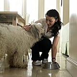 Make Arrangements For Pet Care