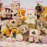 Kitty Kitty Kittens