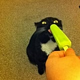 """So I introduced my cat to popsicles.""  Source: Imgur user Rypley"