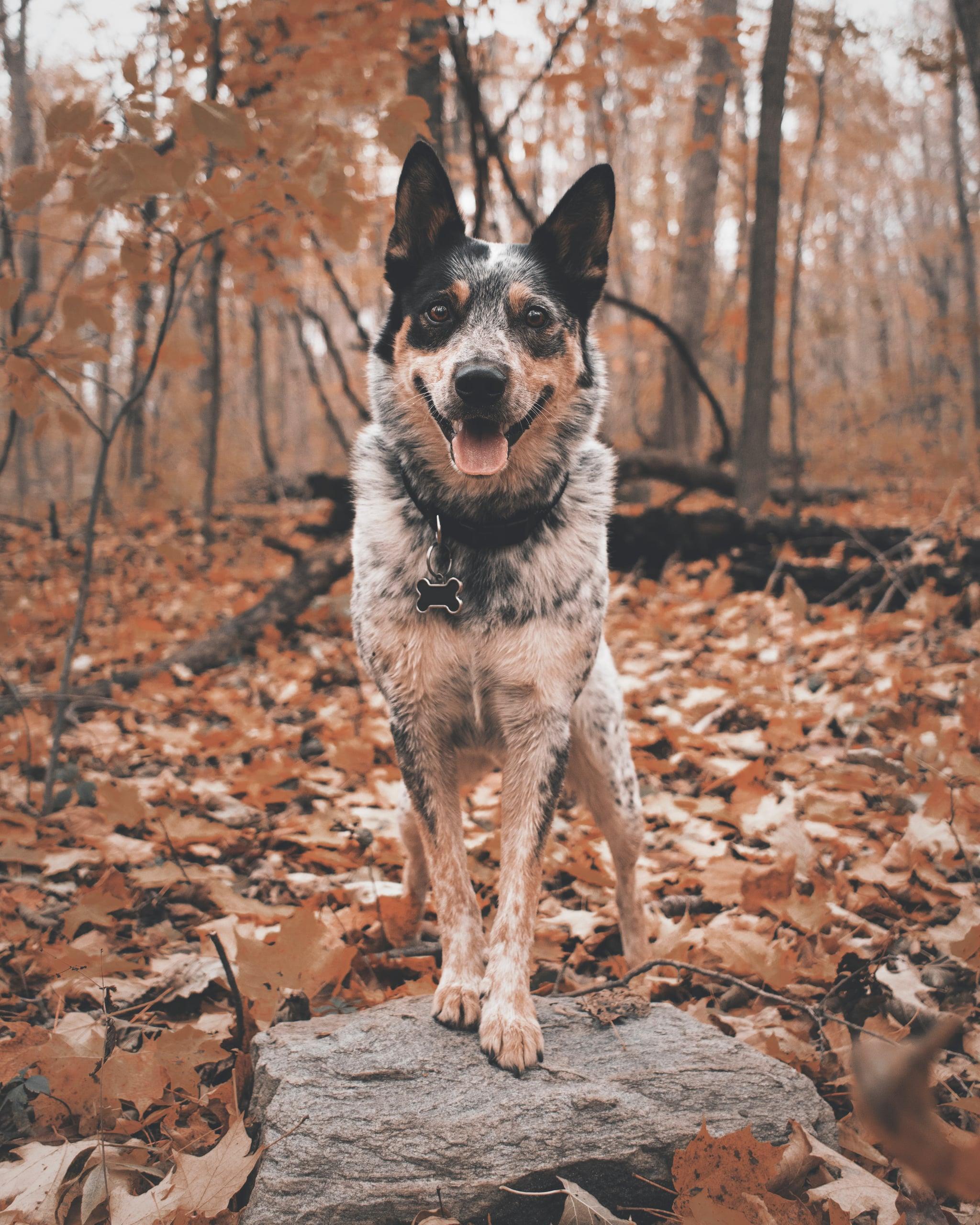 Best Dog Names 2019 Popsugar Family
