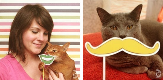 Mustaches For Cats, Dogs With Stuffed Animals and More Cuteness From the Web