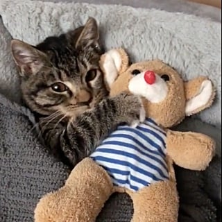 Video of Cat Snuggling Stuffed Animal