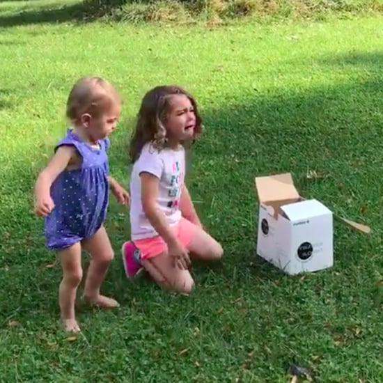 Toddler Throws a Tantrum Over Sibling's Gender Reveal