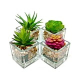 Small Glass Cube Artificial Succulent Planters