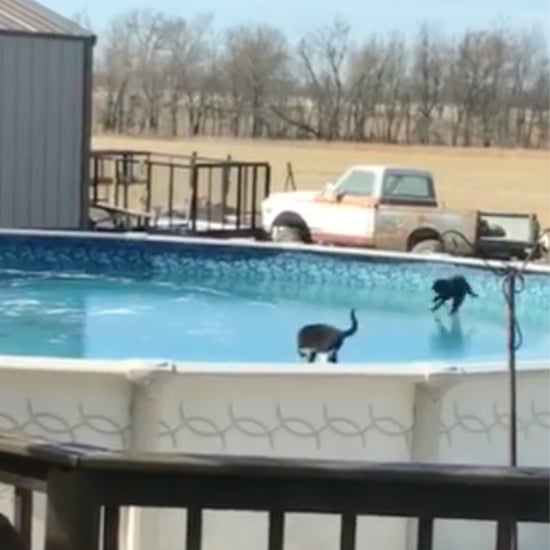 Cats Playing on Frozen Pool | Video