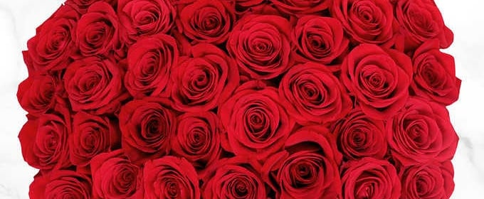Costco Is Selling 50 Roses For Valentine's Day For $40!